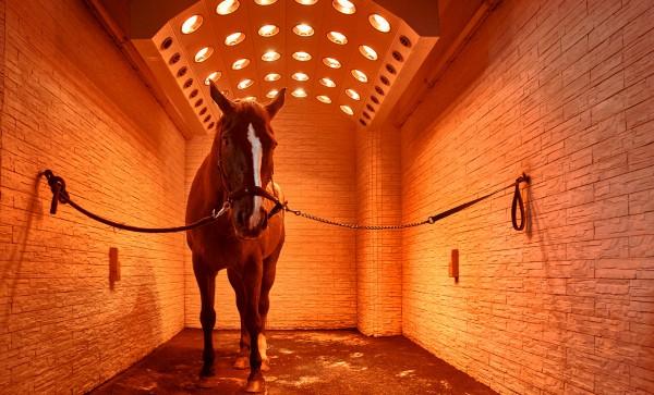 Solariums pour chevaux PMsolar Summerwind