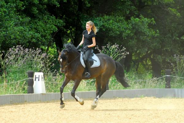 jeune cavalière chevauchant un cheval dans la carrière d'un centre équestre