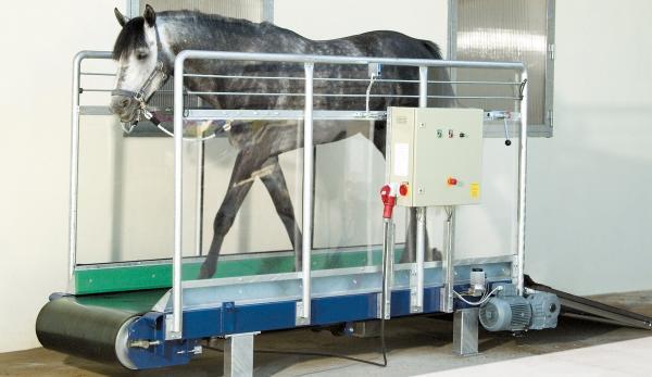 Tapis d'entrainement chevaux S1 – 10km/h