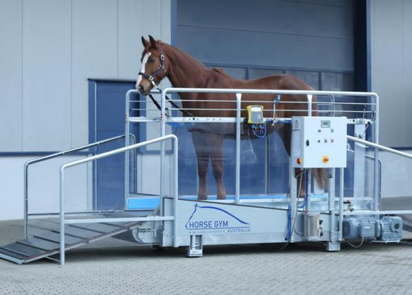 Tapis d'entrainement chevaux Isi trotteur T1 – 18km/h