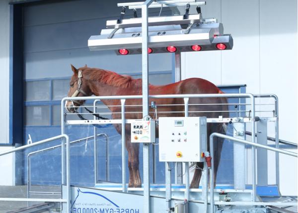 Tapis d'entrainement chevaux Speed trotteur T3 – 35km/h