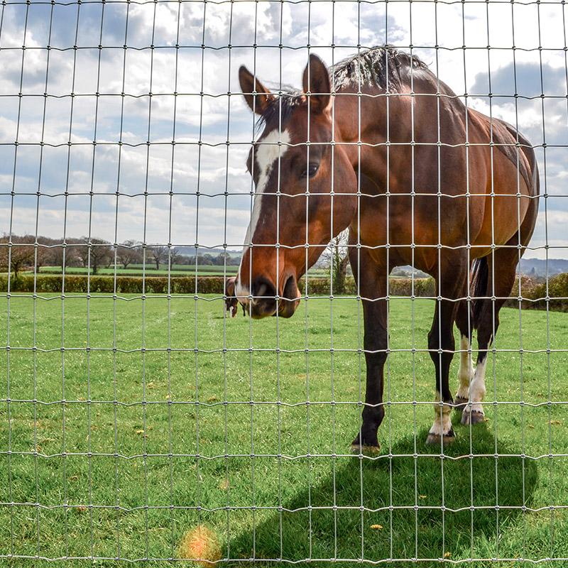 Grillage renforcé pour chevaux